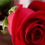 Гадание на розе